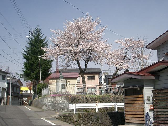 宮本公園の桜