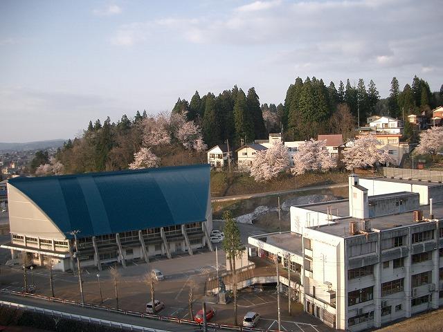 神社側から見た我が家の桜